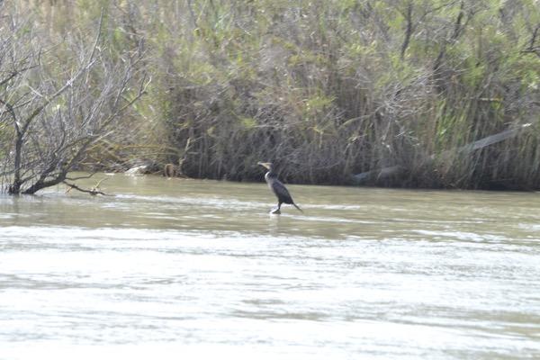 Birdwatching en el Delta del Ebro