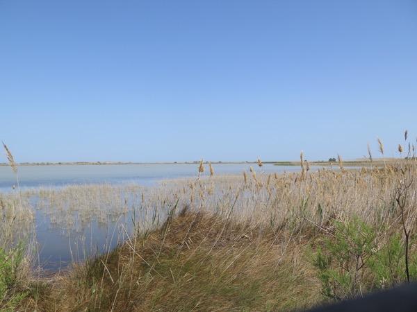 Laguna del Garxal - Delta del Ebro