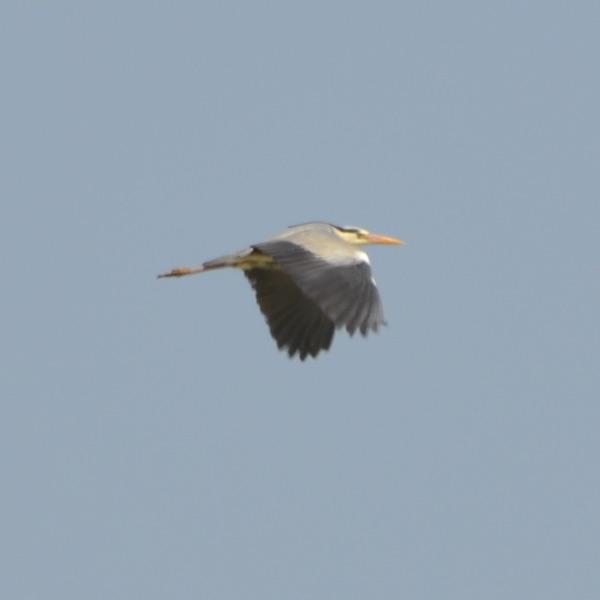 birdwatching-delta-ebro-